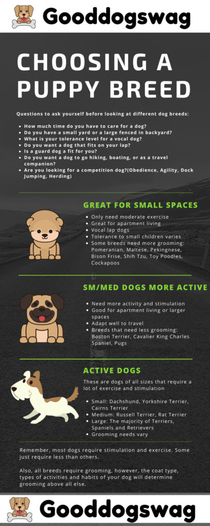 How To Take Care Of A Puppy Choosing A Puppy Breed Infographic
